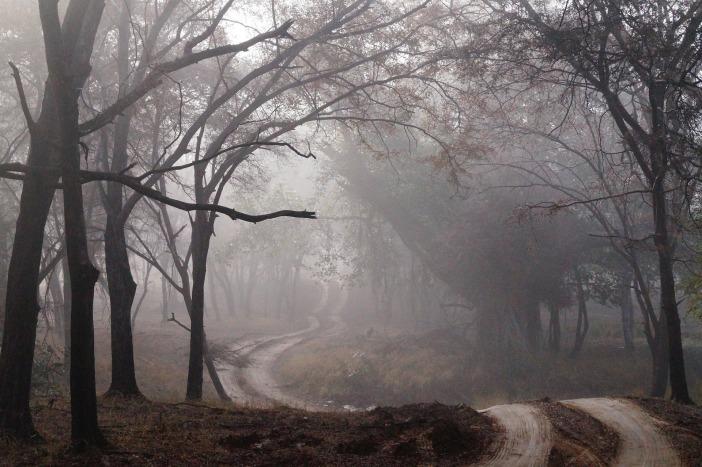 dirt-road-427913_1920